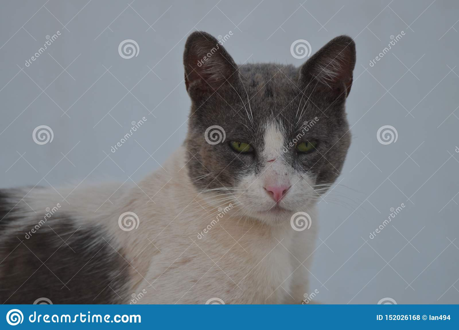 Сторона дикого кота ослабляя в тени - Nea Ионии, Афина Греции