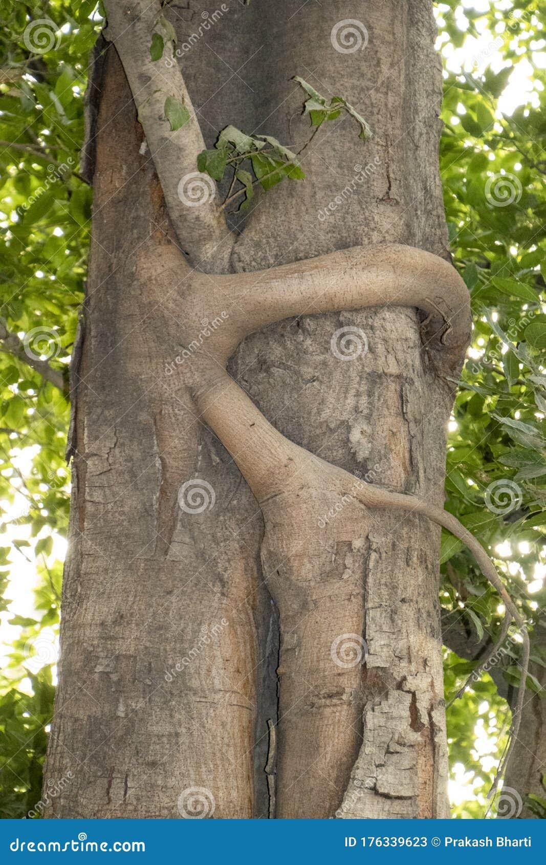 Секс У Дерева Скачать