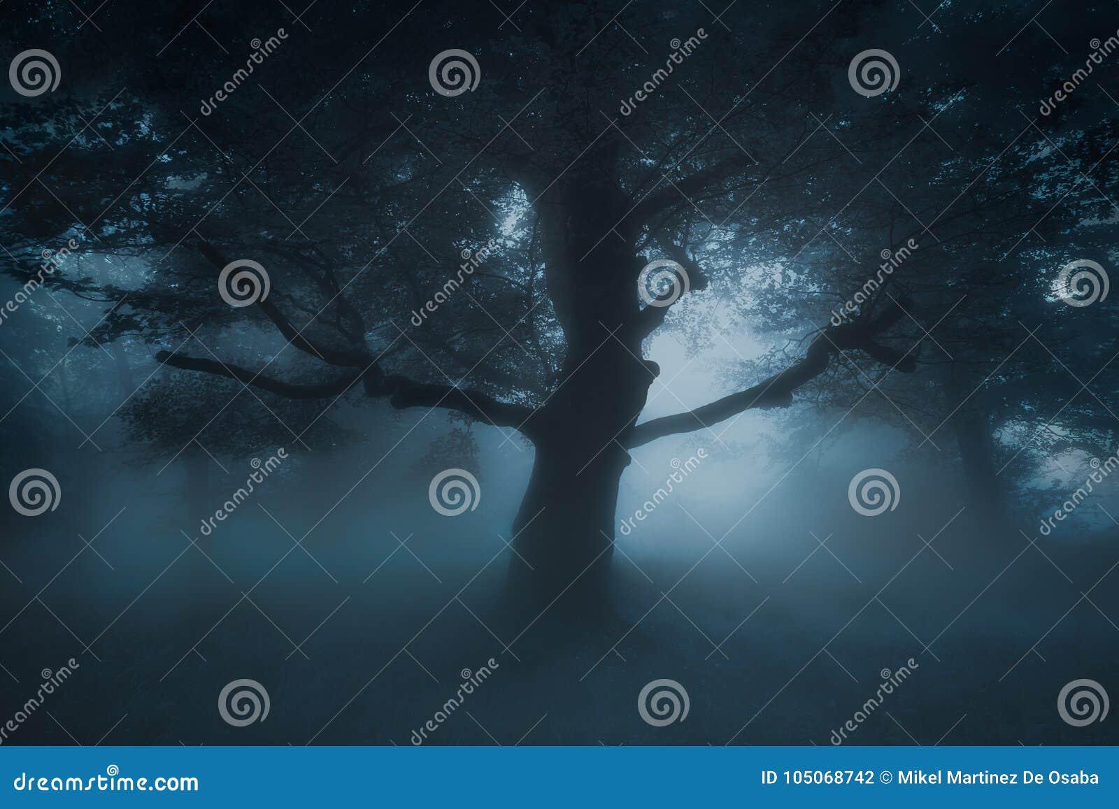 Download Страшное страшное дерево на лесе кошмара Стоковое Фото - изображение насчитывающей загадочно, atlanta: 105068742