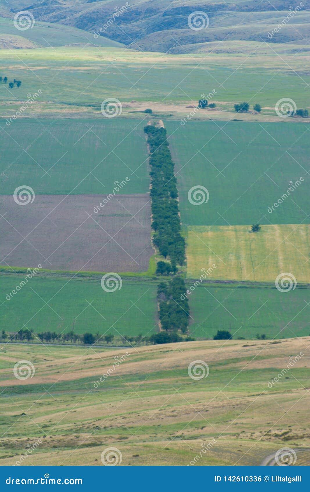 Строка деревьев в середине поля :