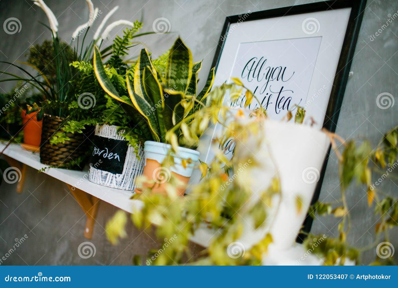 Строка комнатных растений в цветочных горшках на деревянной полке