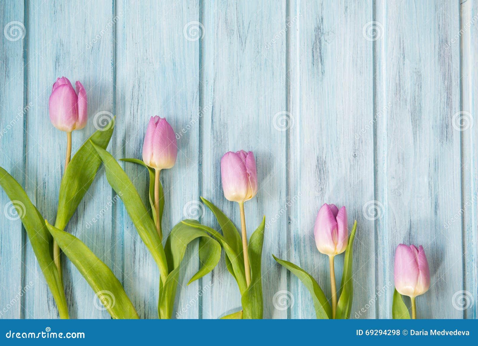 Строка ярких розовых тюльпанов на голубой деревянной предпосылке, взгляд сверху