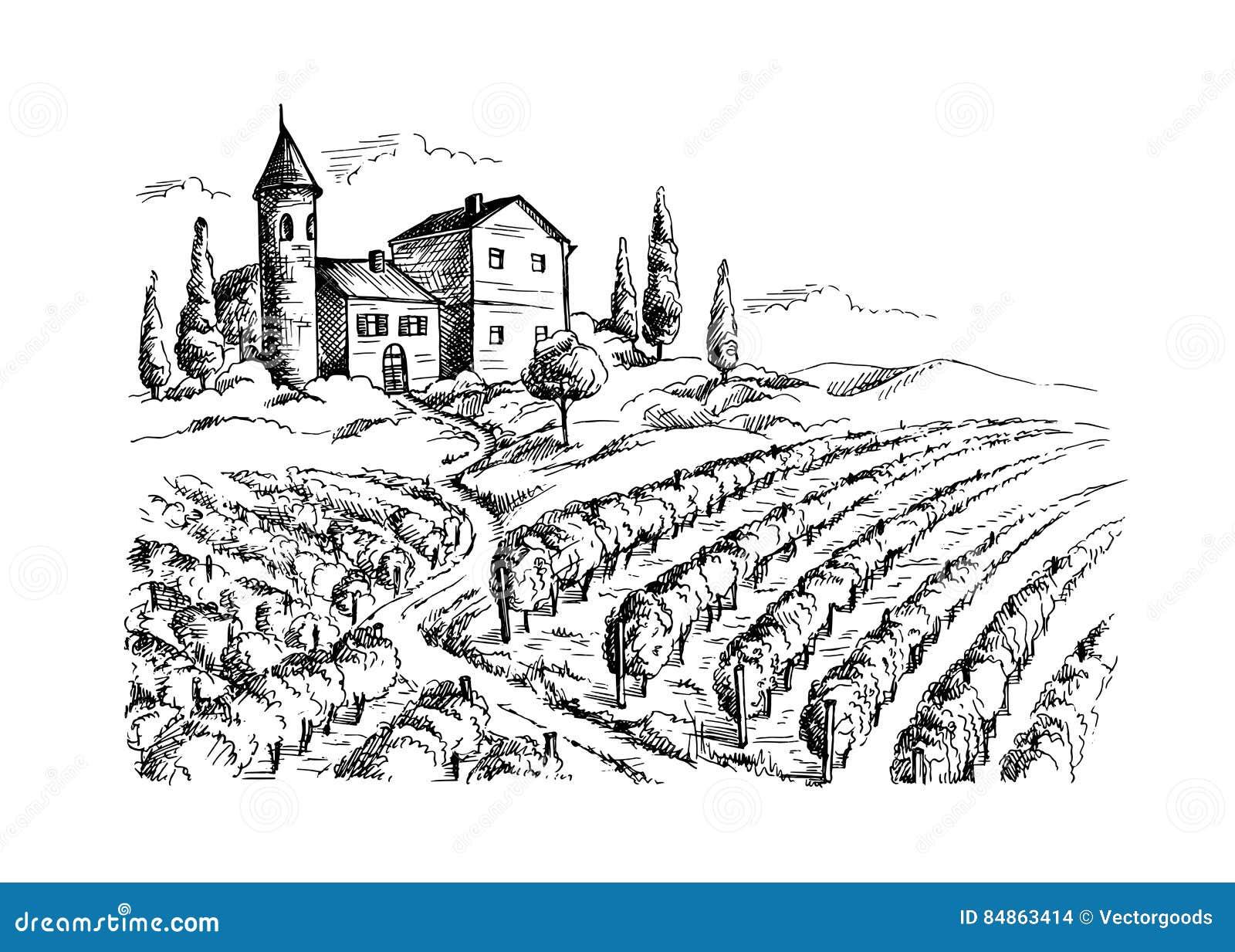 Строки заводов и замка виноградины виноградника