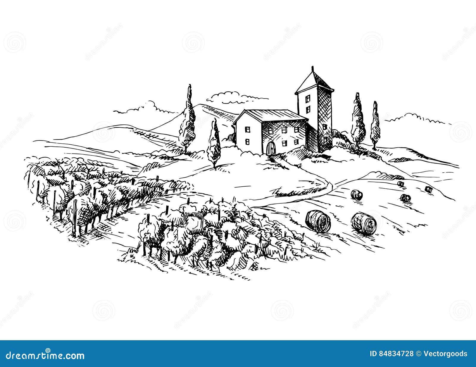 Строки заводов и дома виноградины виноградника