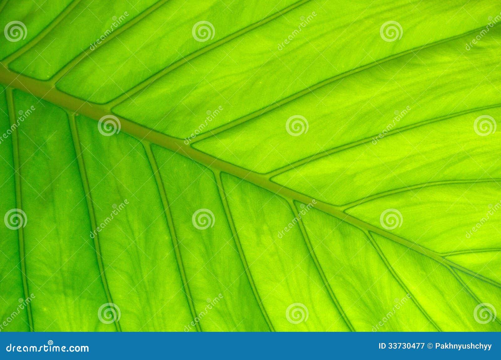 Структура лист