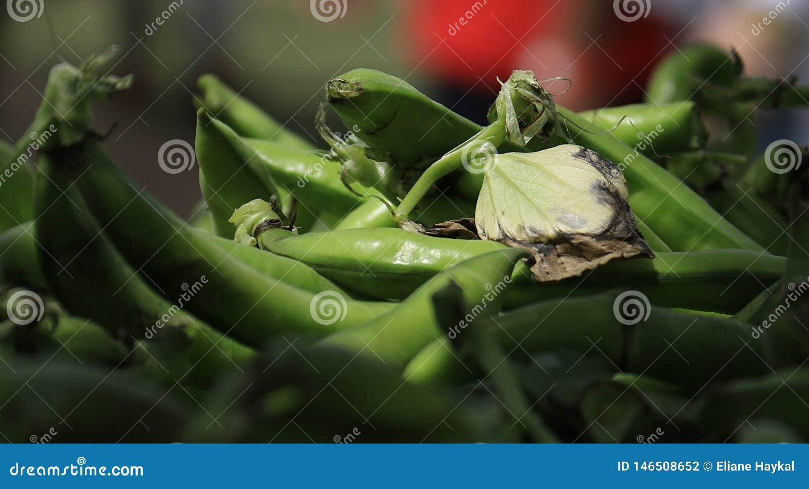 Стручки фасоли Fava с листьями