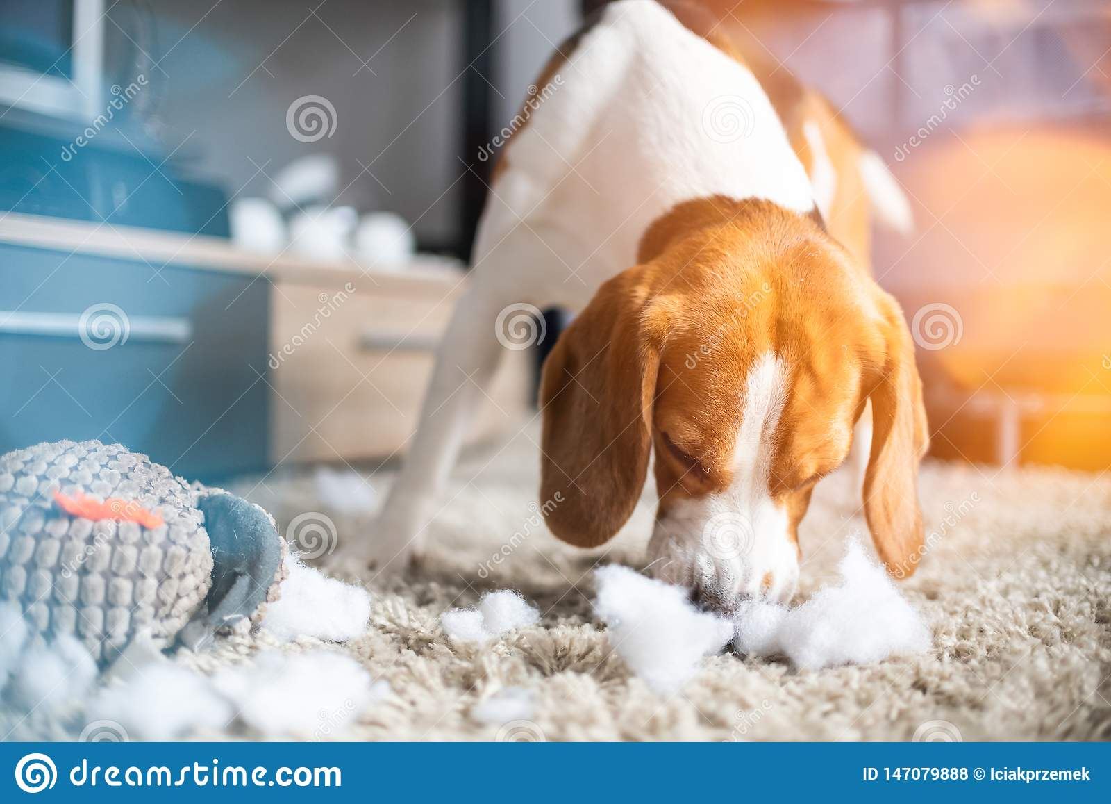 Сулой собаки бигля игрушка в части на ковре