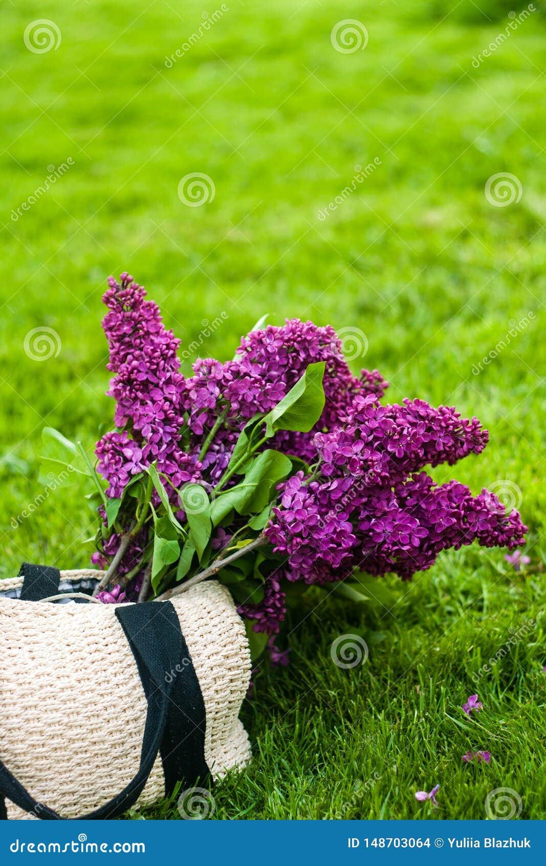 Сумка лета с яркими пурпурными цветками сирени на предпосылке зеленой травы