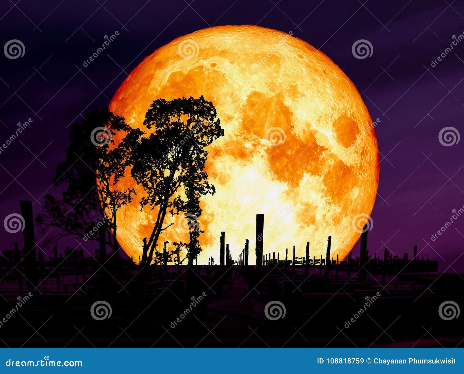 супер луна голубой крови над деревом силуэта пристани развязности