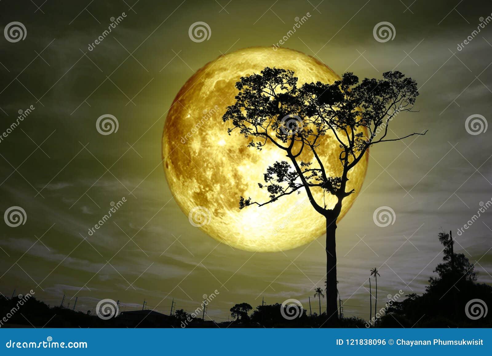 супер польностью желтое дерево силуэта задней части луны и красочное небо