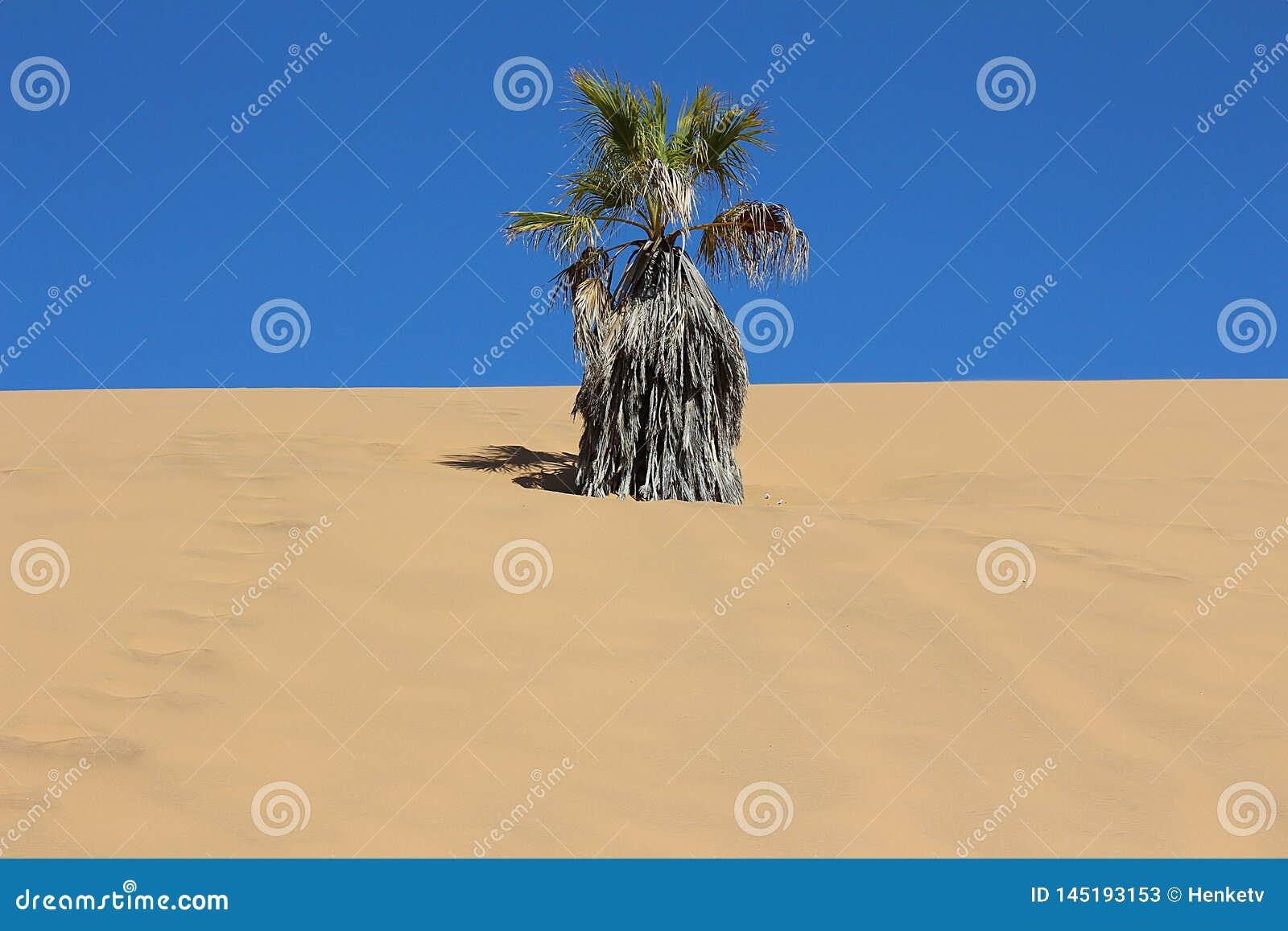 Сухая ладонь в дюне