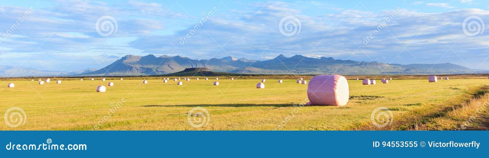 Сухая связка сена в розовой полиэтиленовой пленке, который нужно запасти на сезон зимы с красочными горами как предпосылка