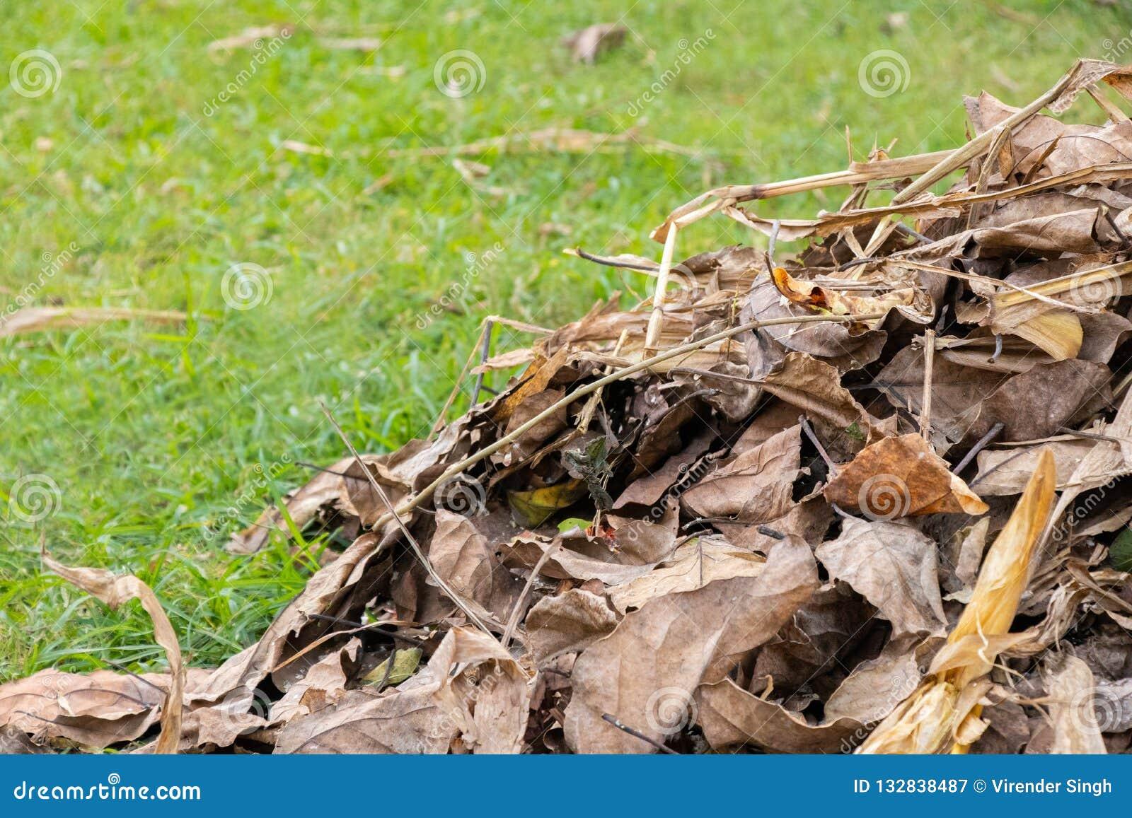 Сухие листья деревьев лежа на земле