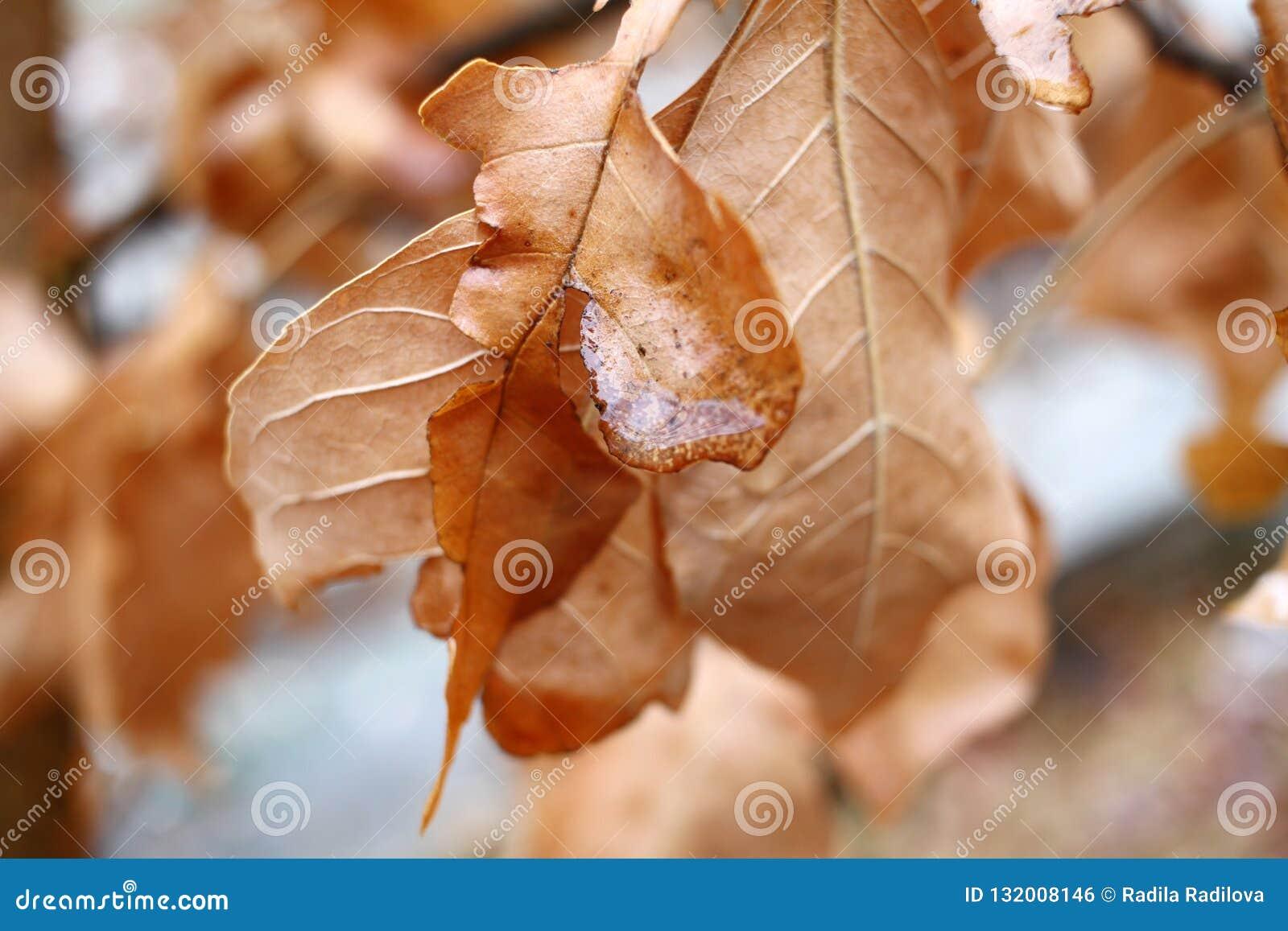 Сухие листья осени с падениями воды Концепция осени сезона Естественная предпосылка обоев