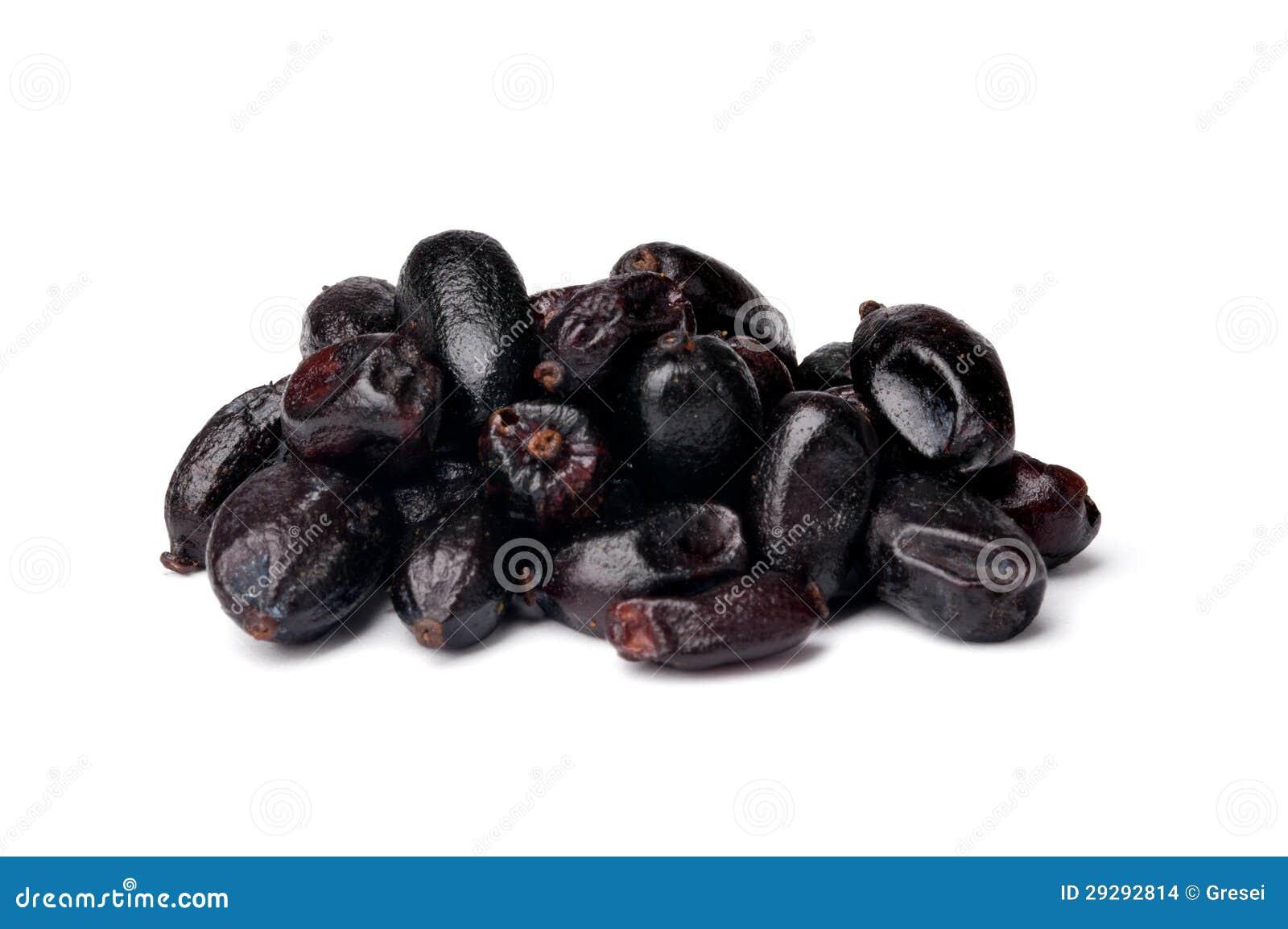 барбарис чёрный фото