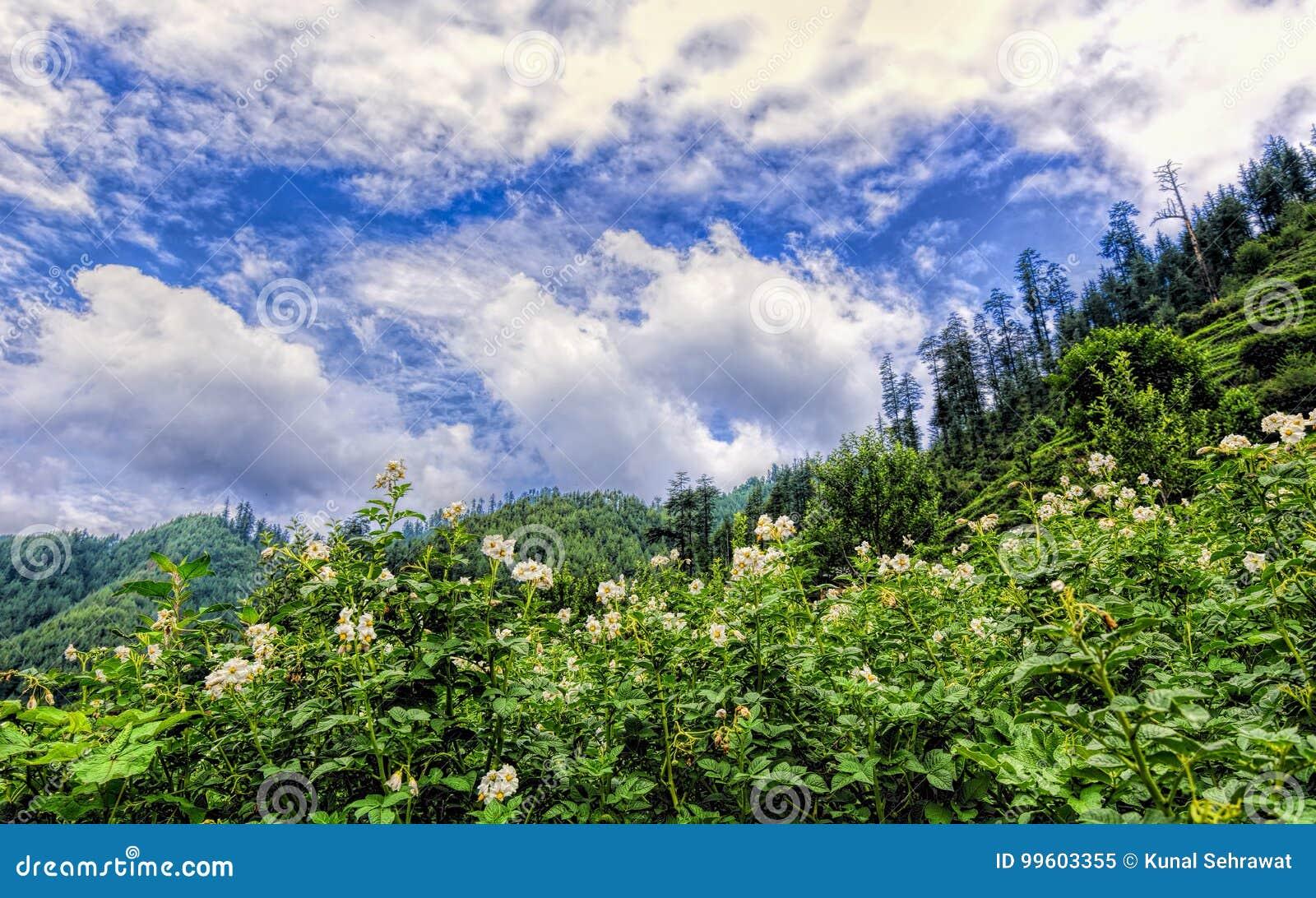 Растительный мир Индии. Леса. | Индия - страна мечты. | 904x1300