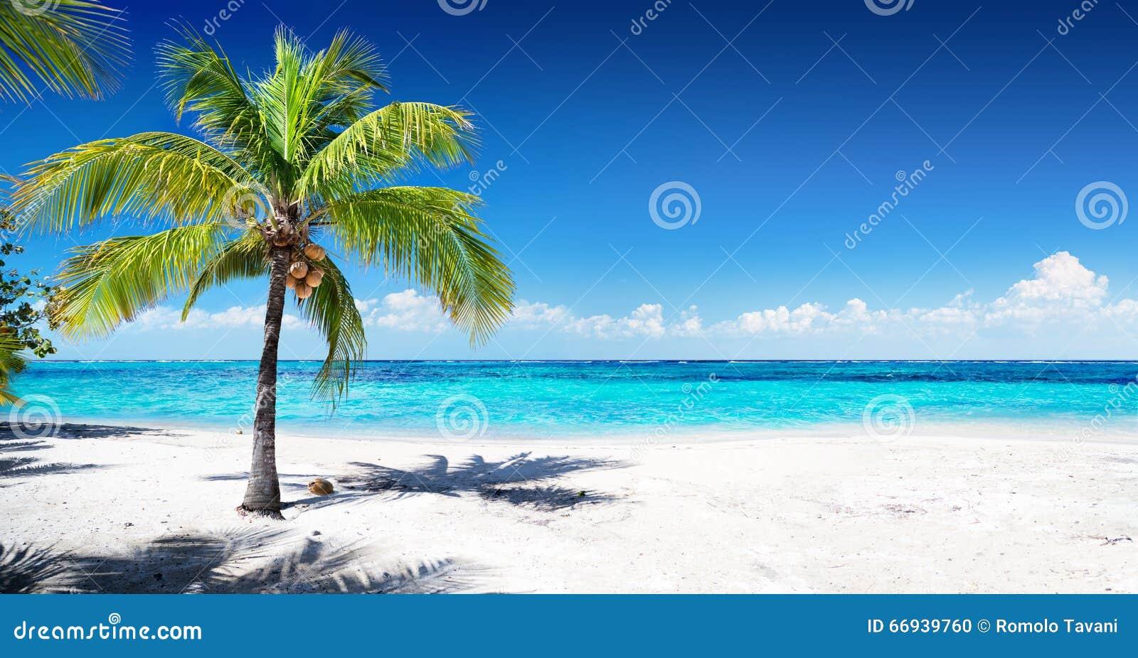 Сценарный пляж коралла
