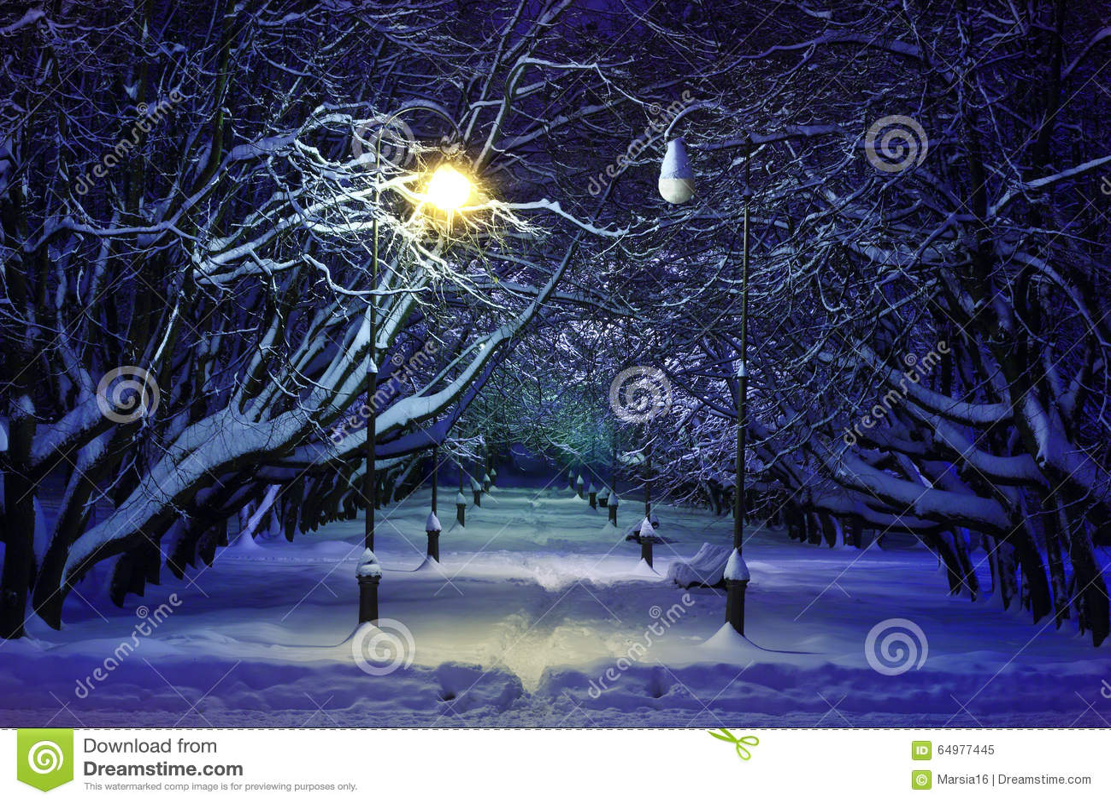 Сцена ночи парка зимы