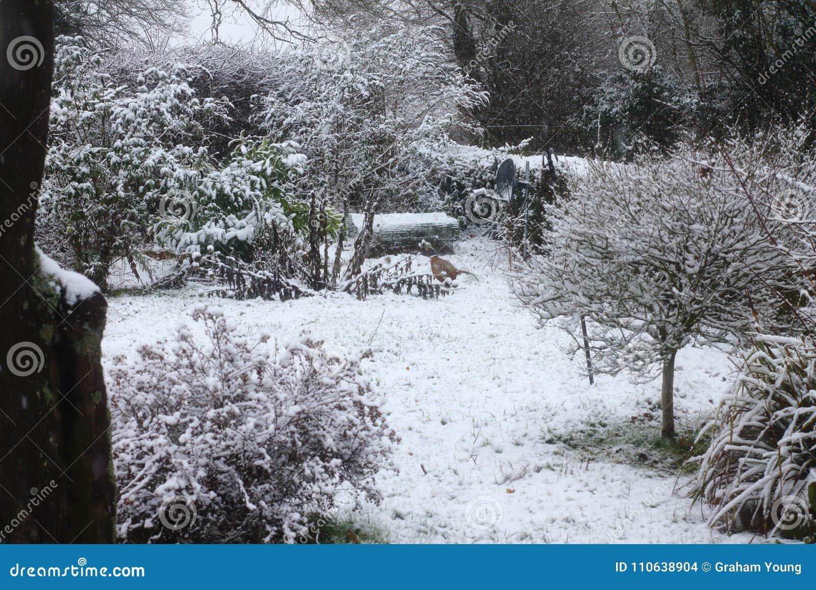 Сцена снега суффолька