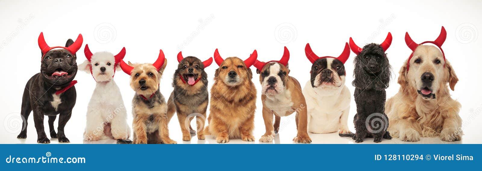 Счастливая группа в составе собаки празднуя хеллоуин