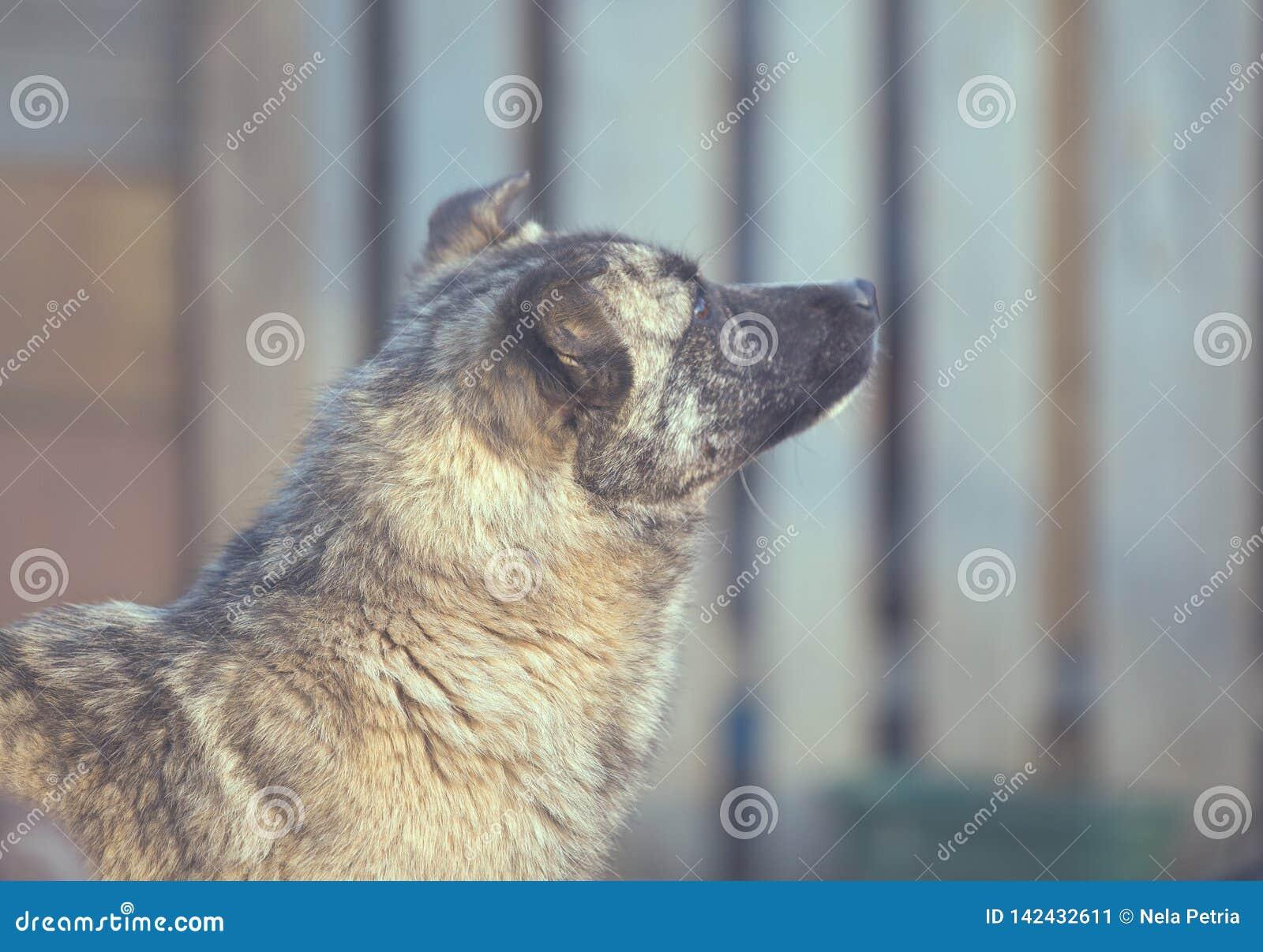 Счастливая принятая бездомная собака, принимает не ходит по магазинам