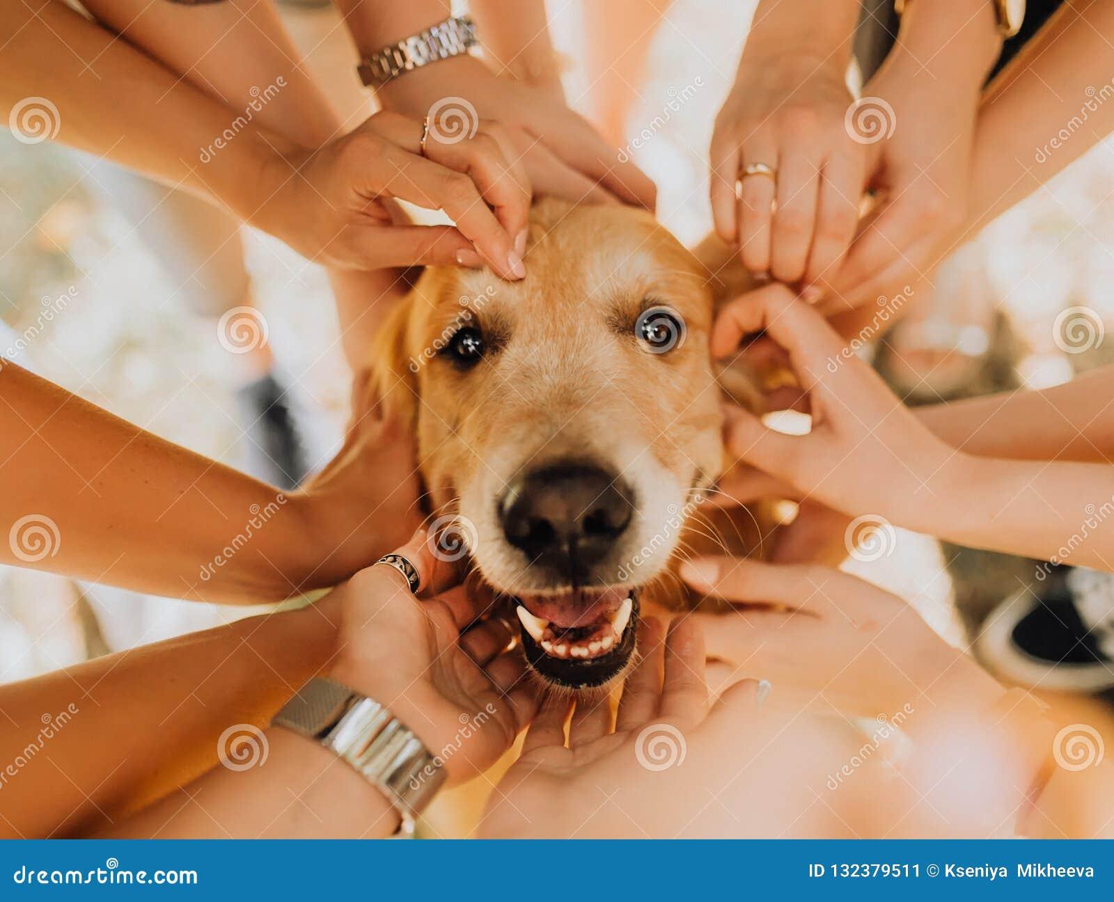 счастливая собака золотого Retriever с рукой manr на его Парк в предпосылке