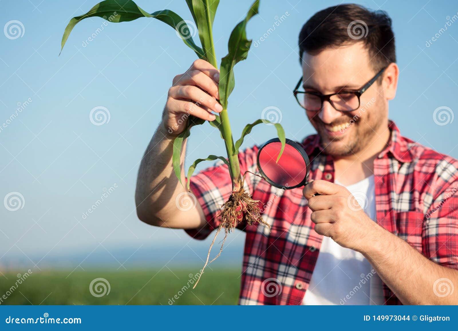 Счастливые молодые agronomist или фермер рассматривая молодой корень завода мозоли с лупой