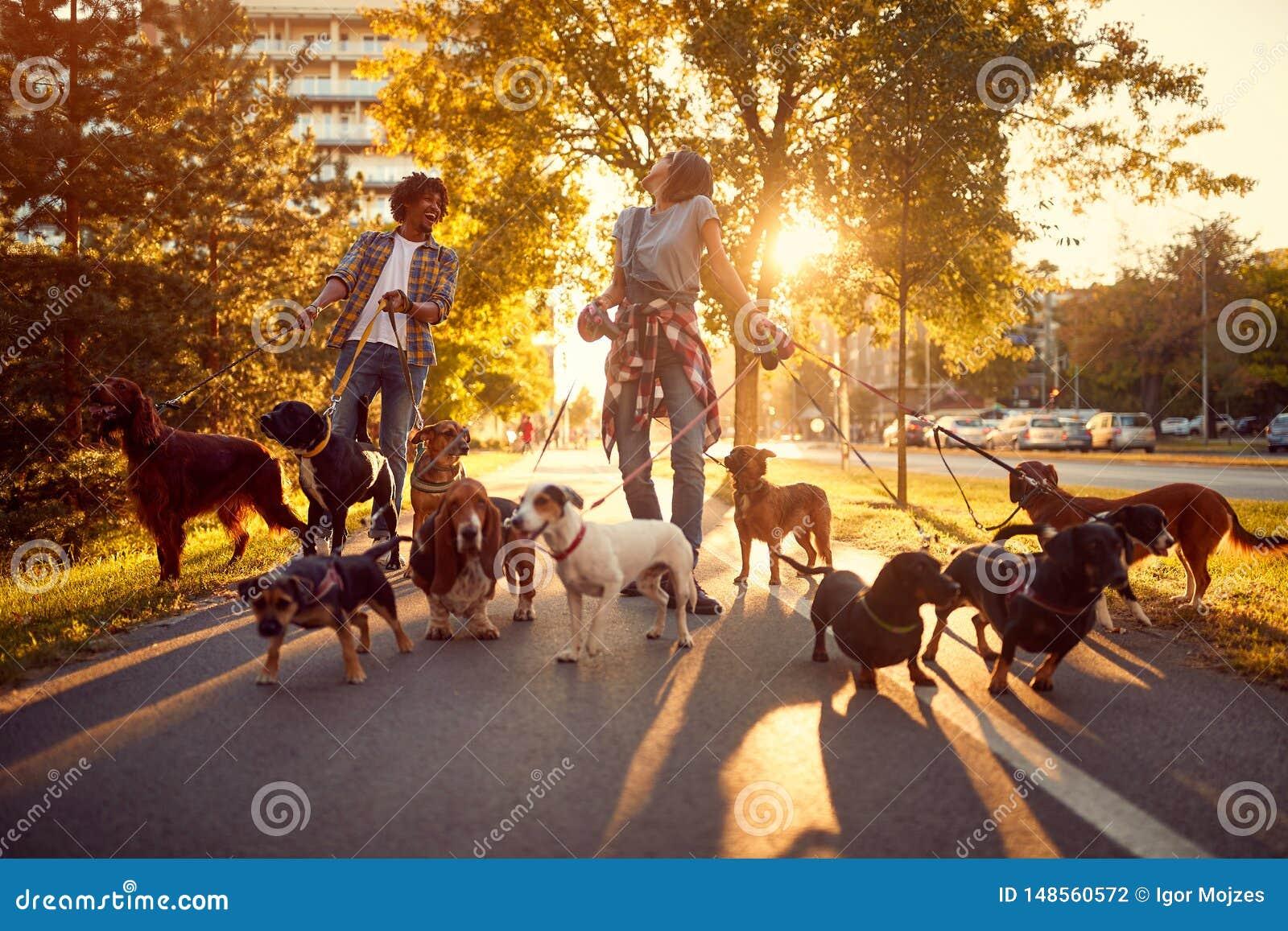 Счастливый ходок собаки девушки и человека с собаками наслаждаясь в прогулке