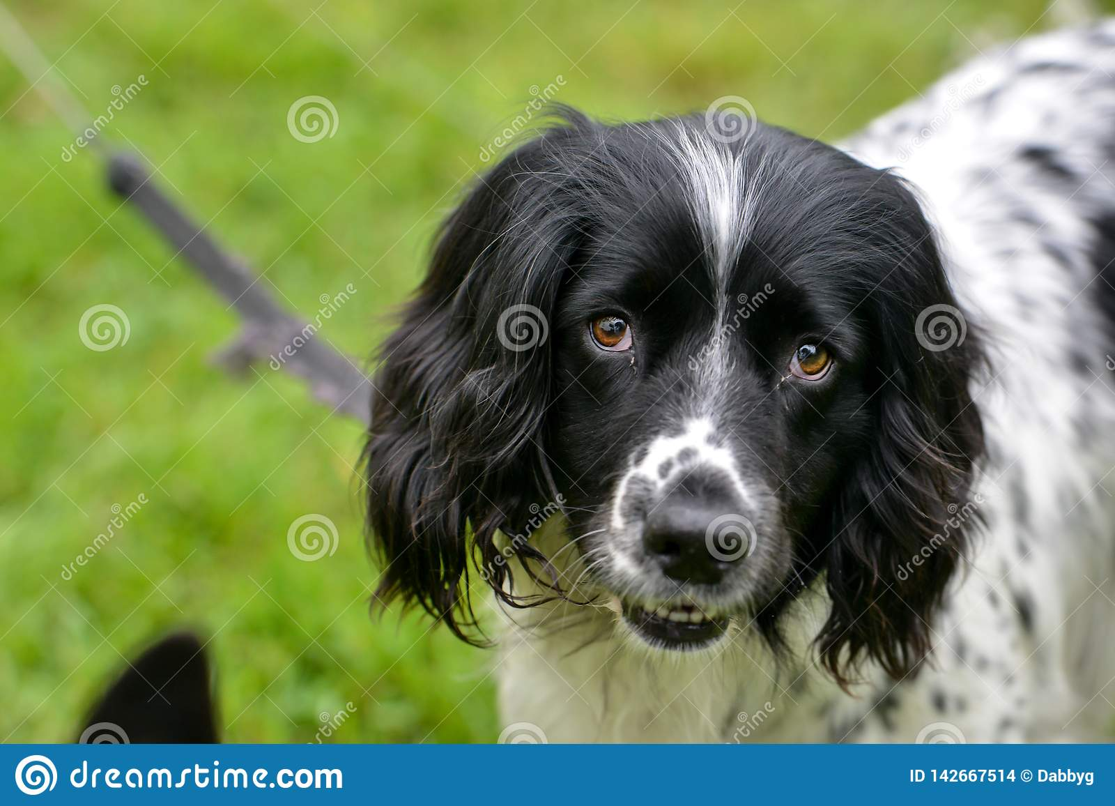 Счастливый щенок смотря камеру пока на руководстве