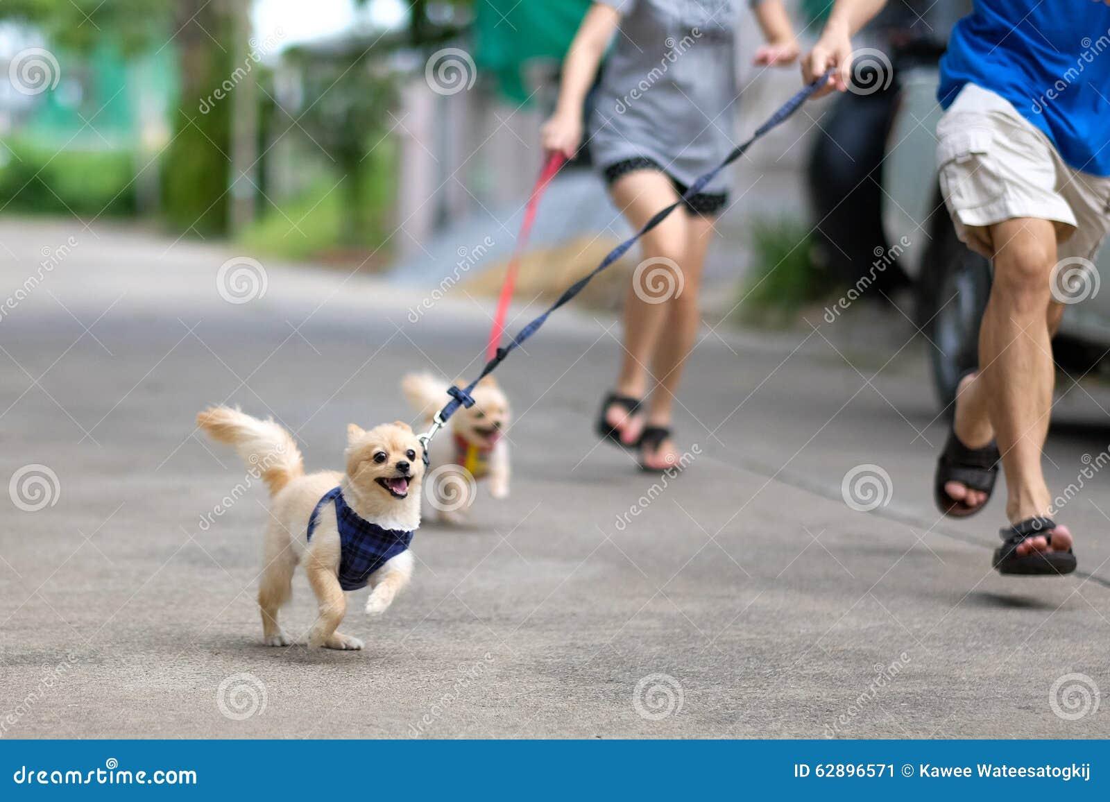 Счастливые идущие собаки