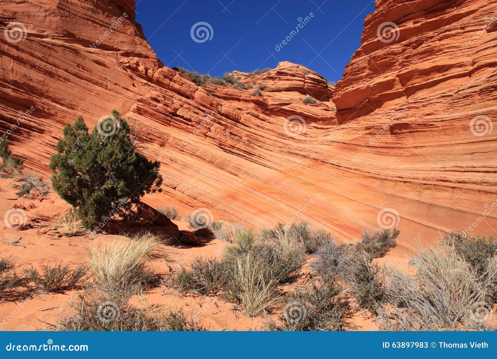 США, Аризона: Buttes койота южные - ваяемые слои песчаника