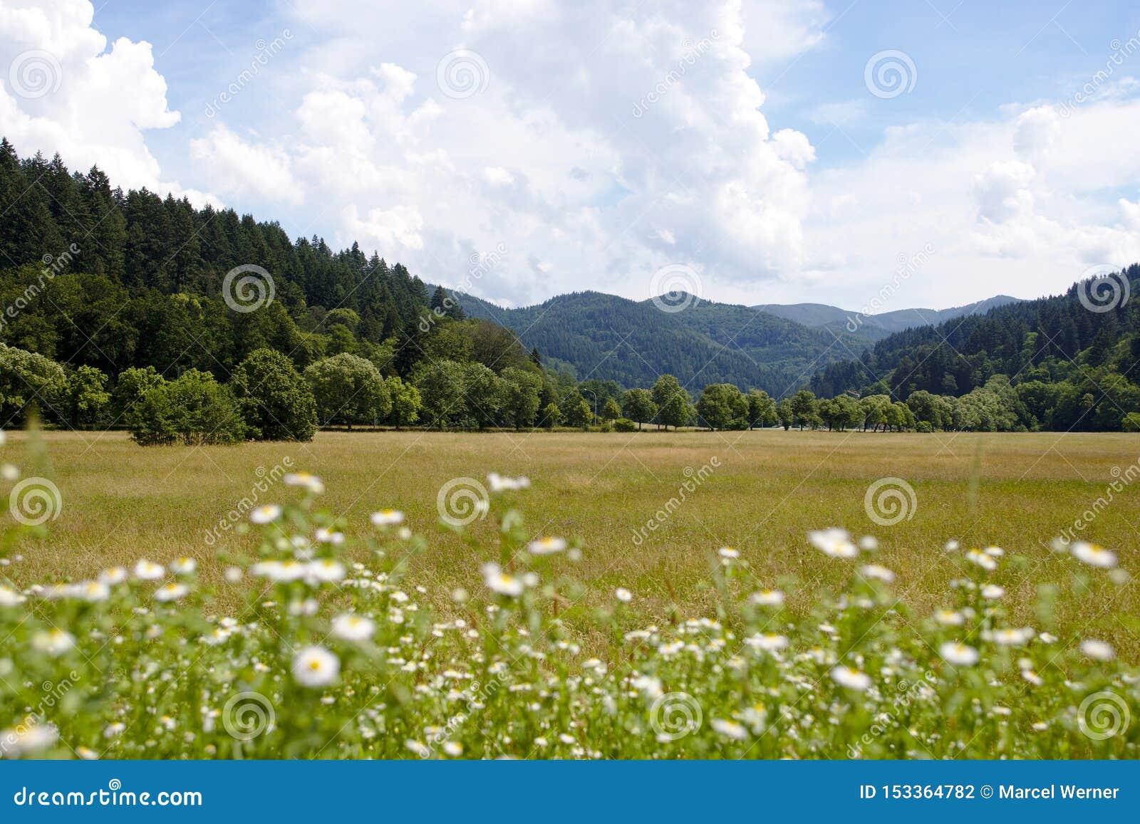Съемка зеленых холмов черного леса, Германия ландшафта