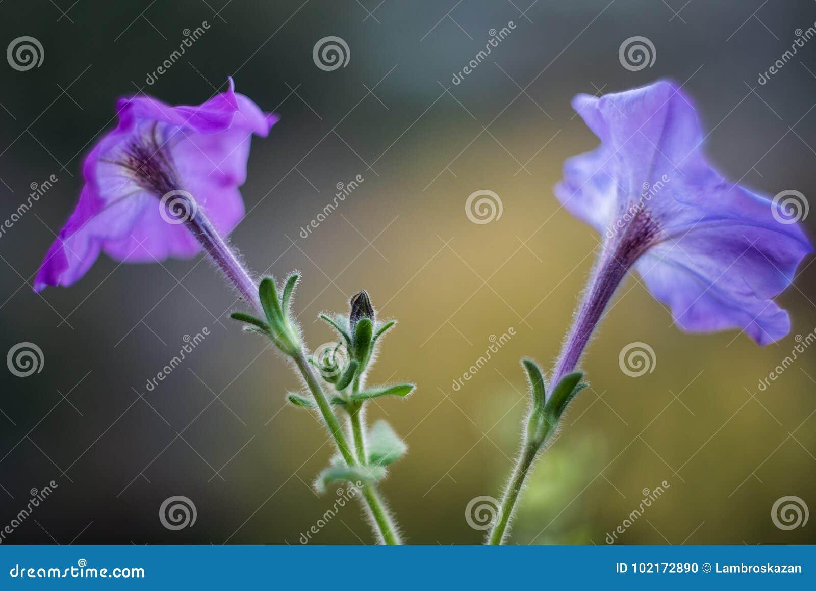 Съемки стиля фиолетовых цветков ретро с отмелым Dept поля