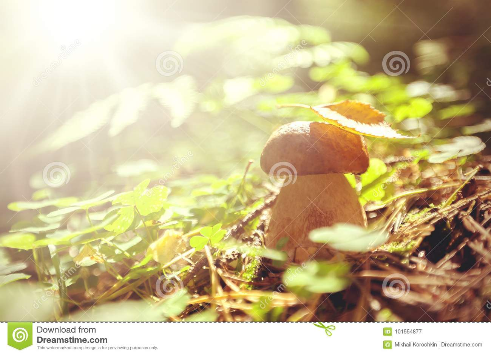 Съестной гриб в лесе лета