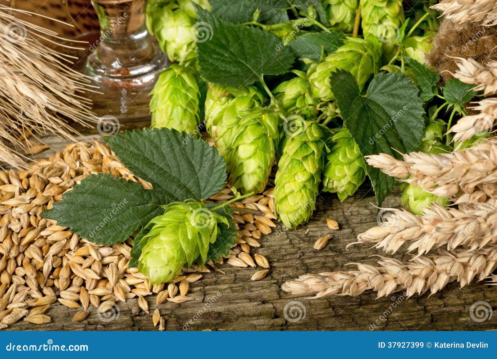 Сырье для продукции пива