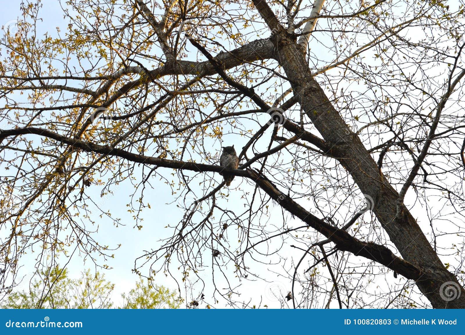 Сыч в дереве