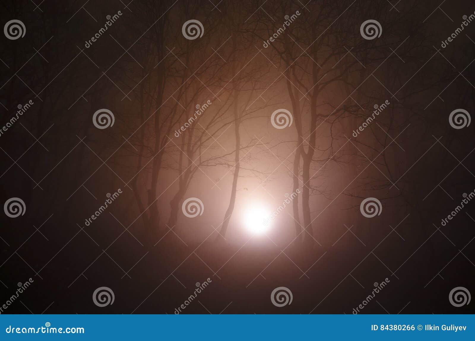 Сюрреалистический свет в темном лесе, волшебная фантазия освещает в fairy туманном лесе