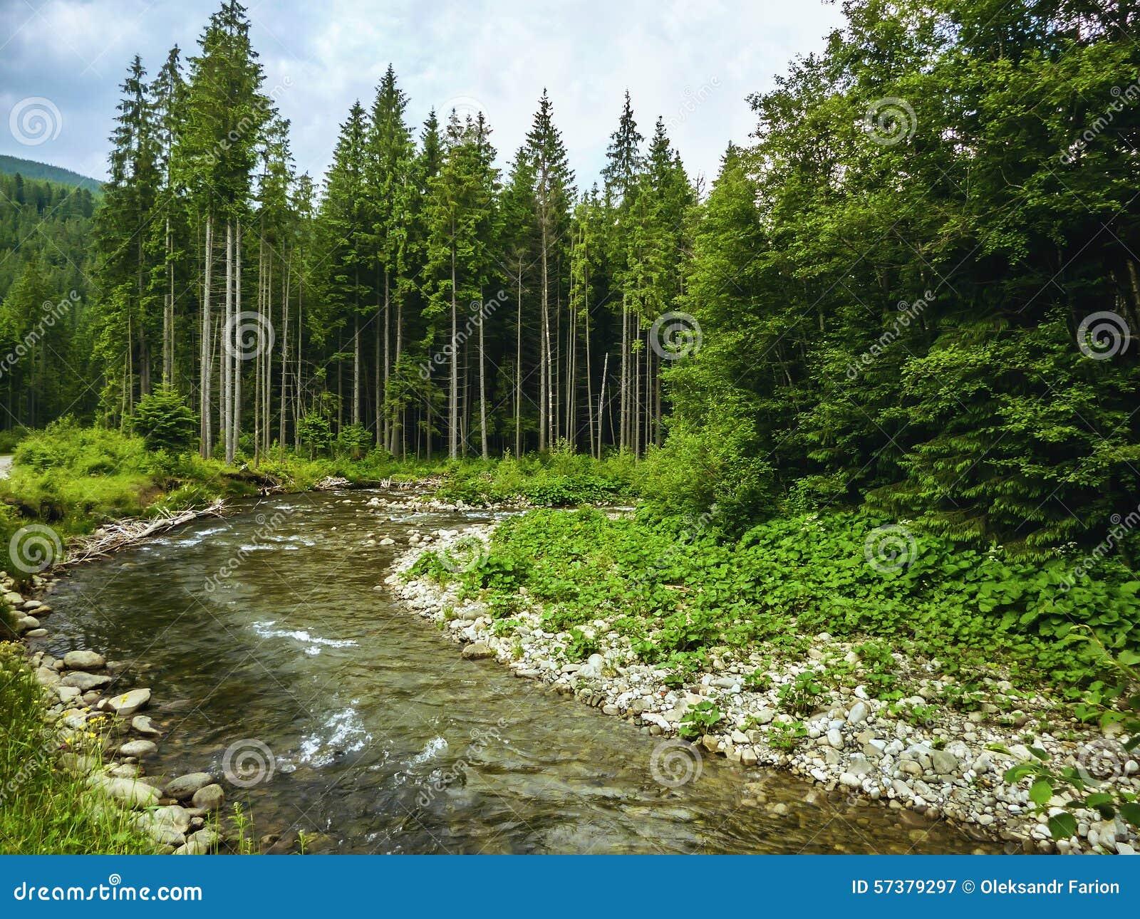 Славная сцена с рекой Prut горы в зеленом прикарпатском лесе