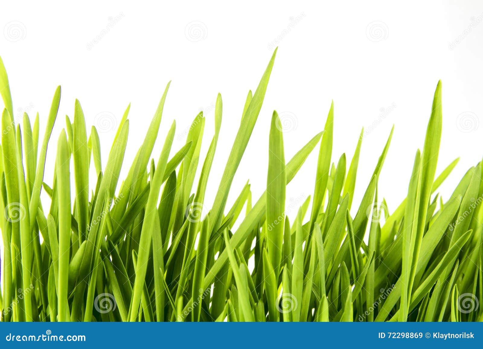Download Славная трава пшеницы стоковое изображение. изображение насчитывающей здорово - 72298869