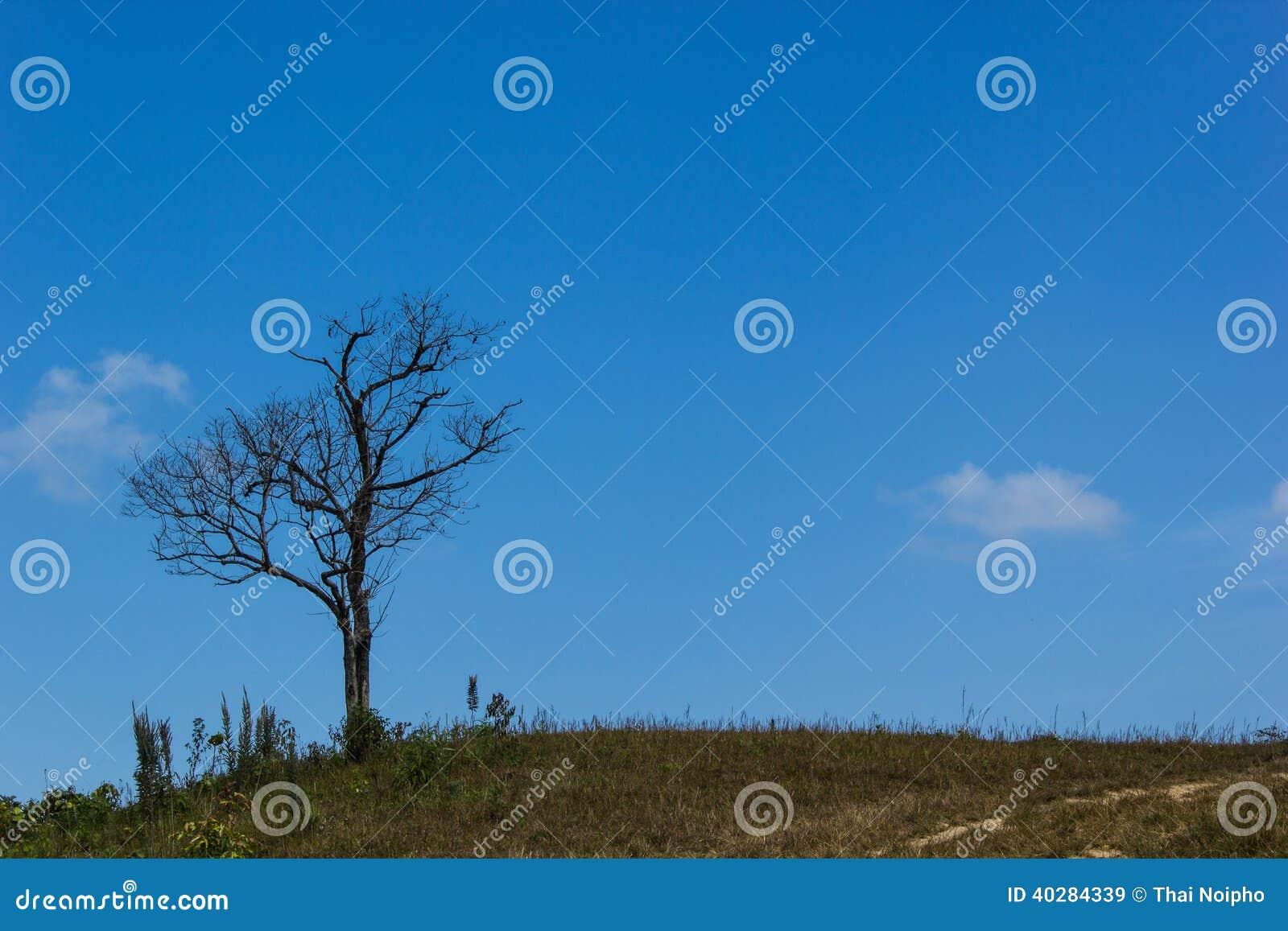 След выходит деревья