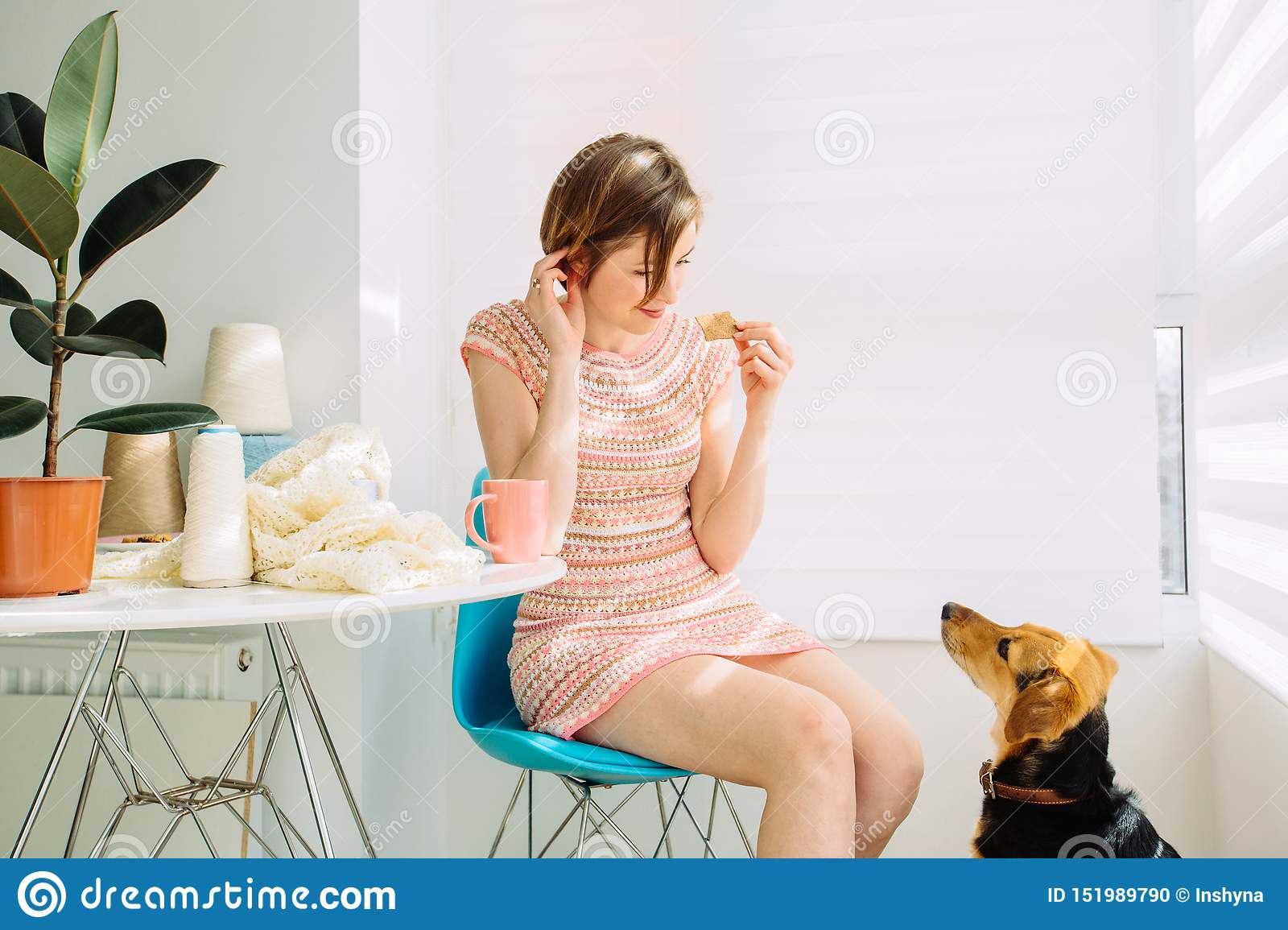 Сraftswoman relaxing with coffee cup, eating biscuit, talking with a dog, knitting in cozy workplace at home interior. Female