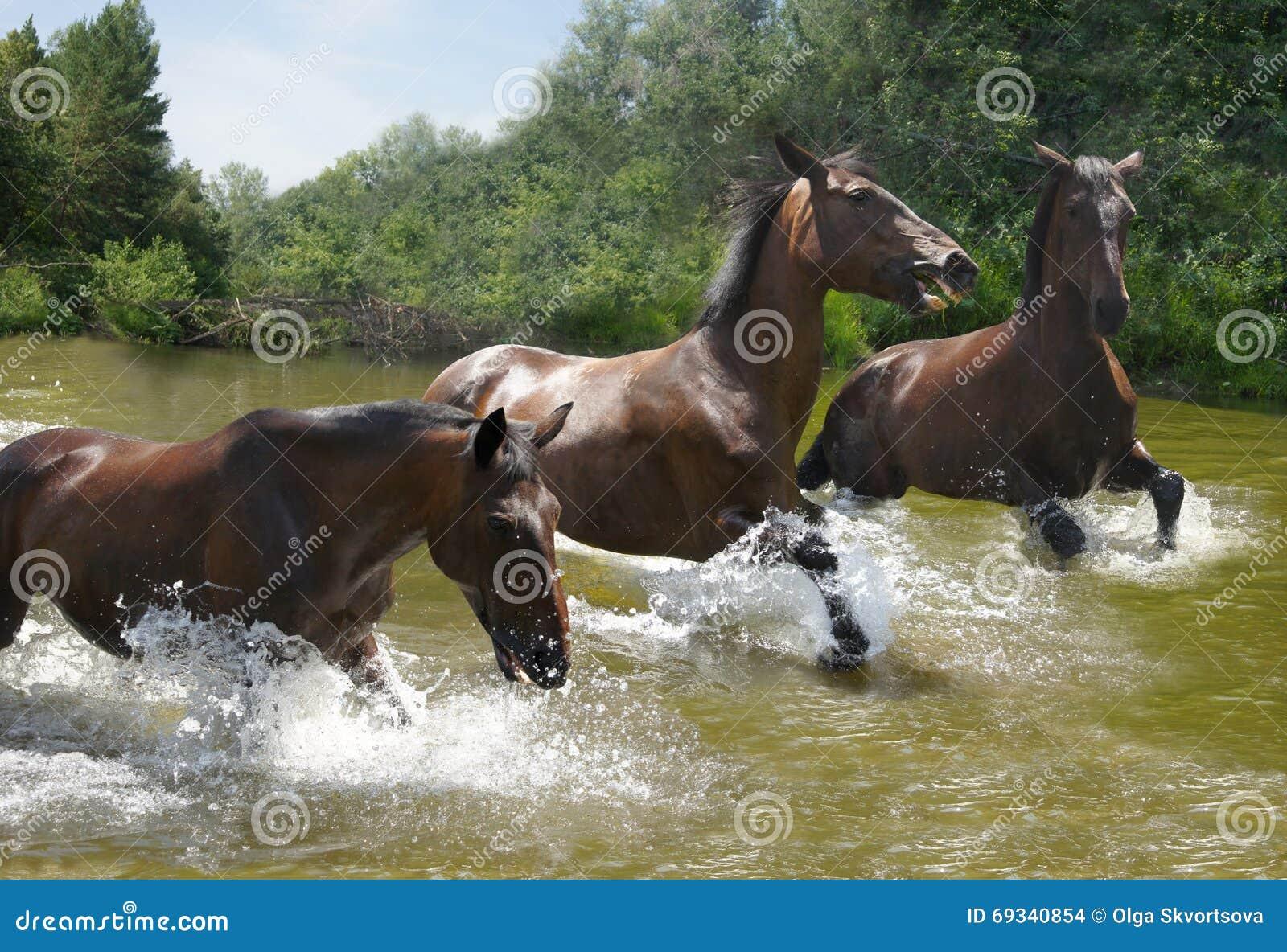 Табун лошадей скакать на воде