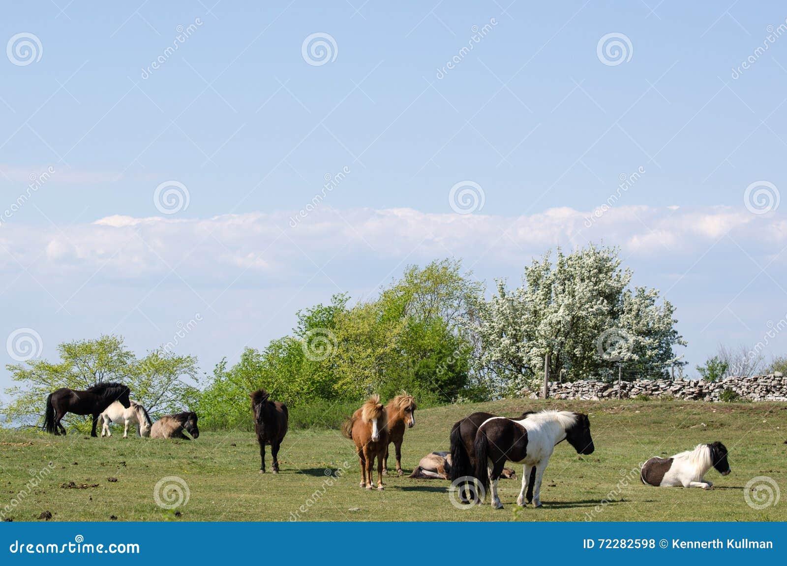 Download Табун пестротканых лошадей стоковое фото. изображение насчитывающей ферма - 72282598