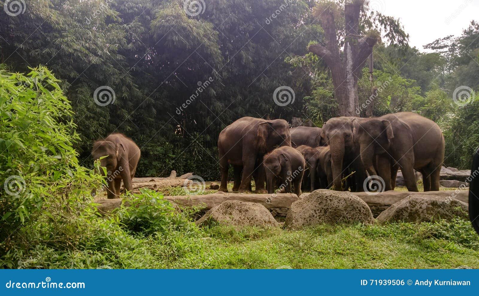 Табун фото слонов