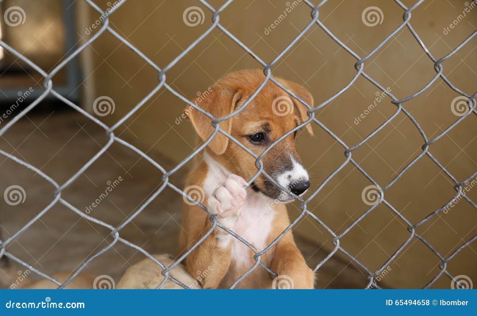 Тайская собака в ждать клетки принимает к новому дому