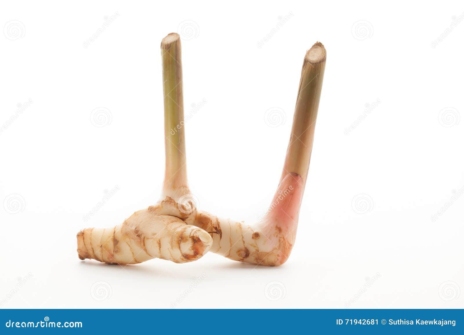 также как имбиря еды флейвора предпосылки specice запаха kung s kai ингридиентов различного galangal важное такая тайская белизна