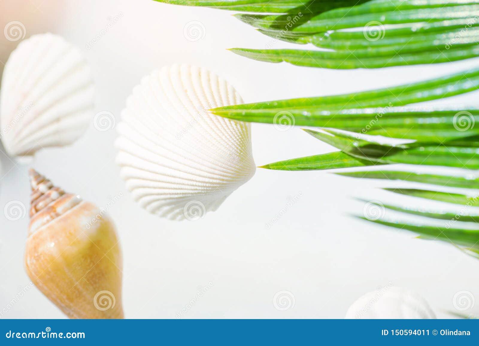 Творческая морская концепция перемещения спа здоровья лета Красивые раковины моря различных цветов форм на пастельной предпосылке