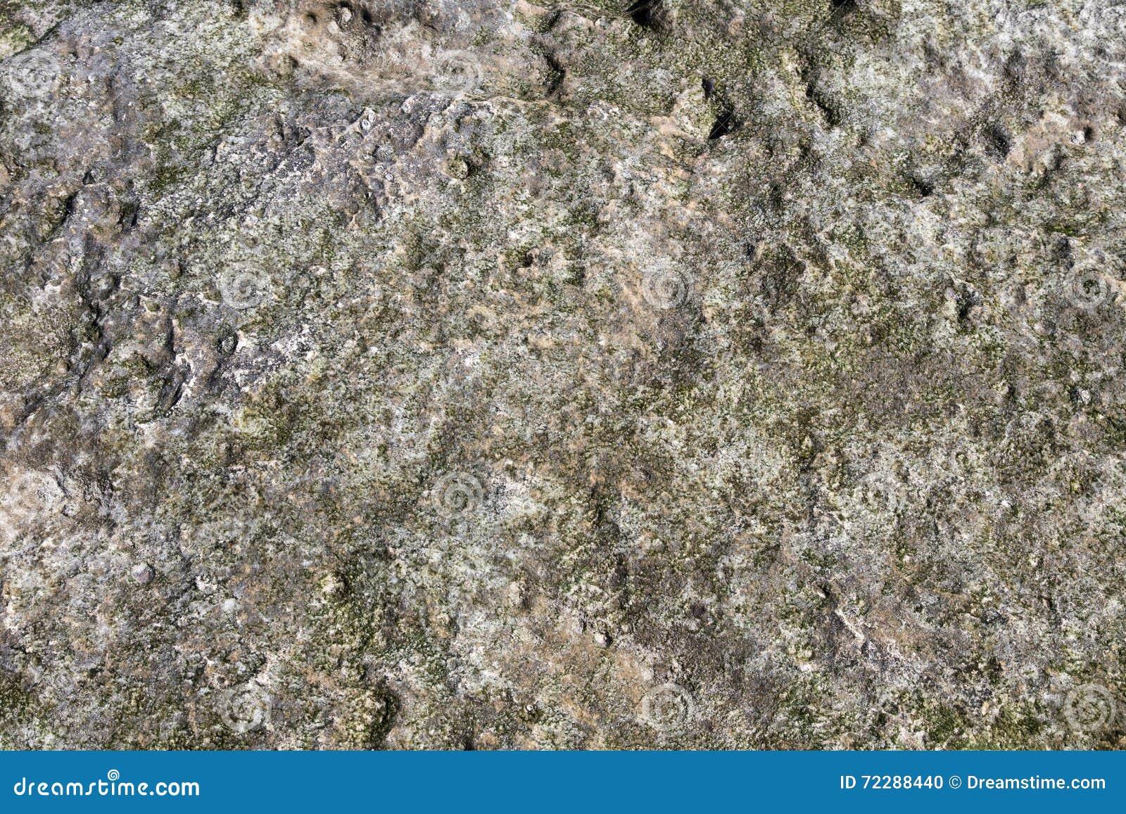 Download Текстура коралла в солнце после полудня Стоковое Фото - изображение насчитывающей раковины, коралл: 72288440