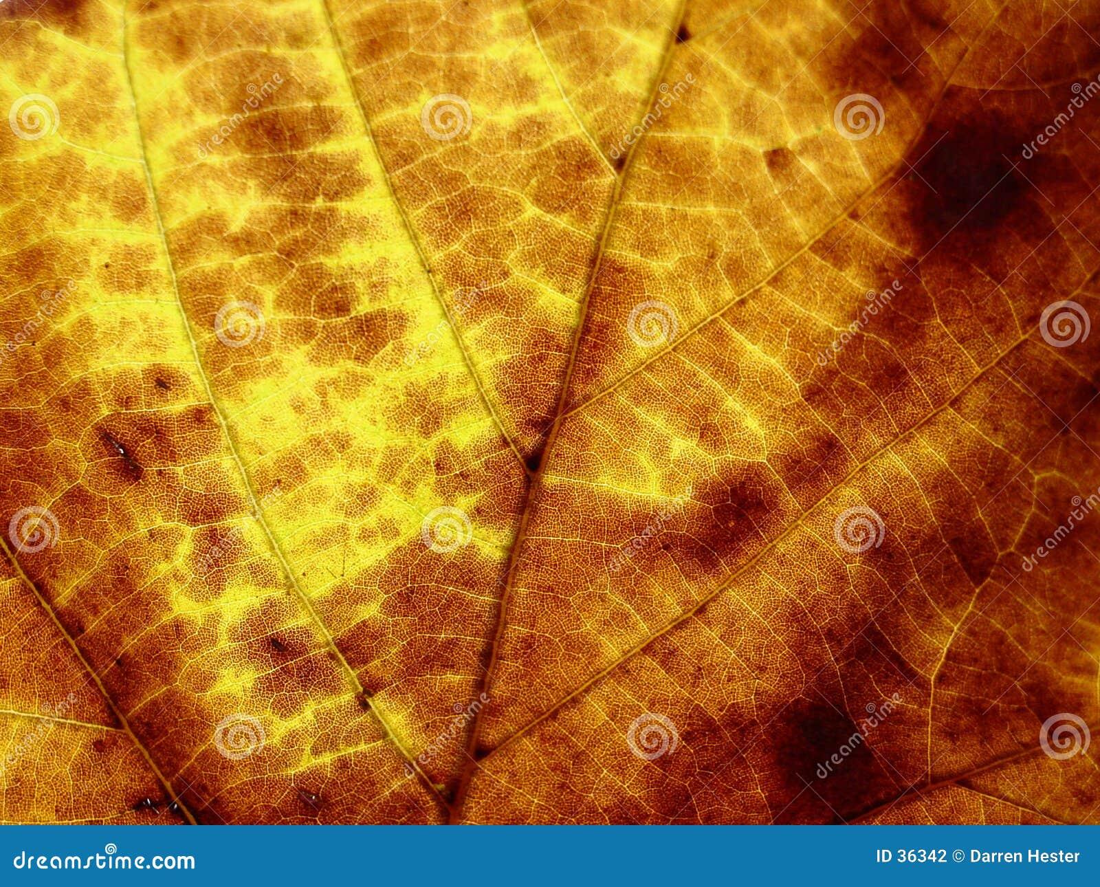 текстура листьев