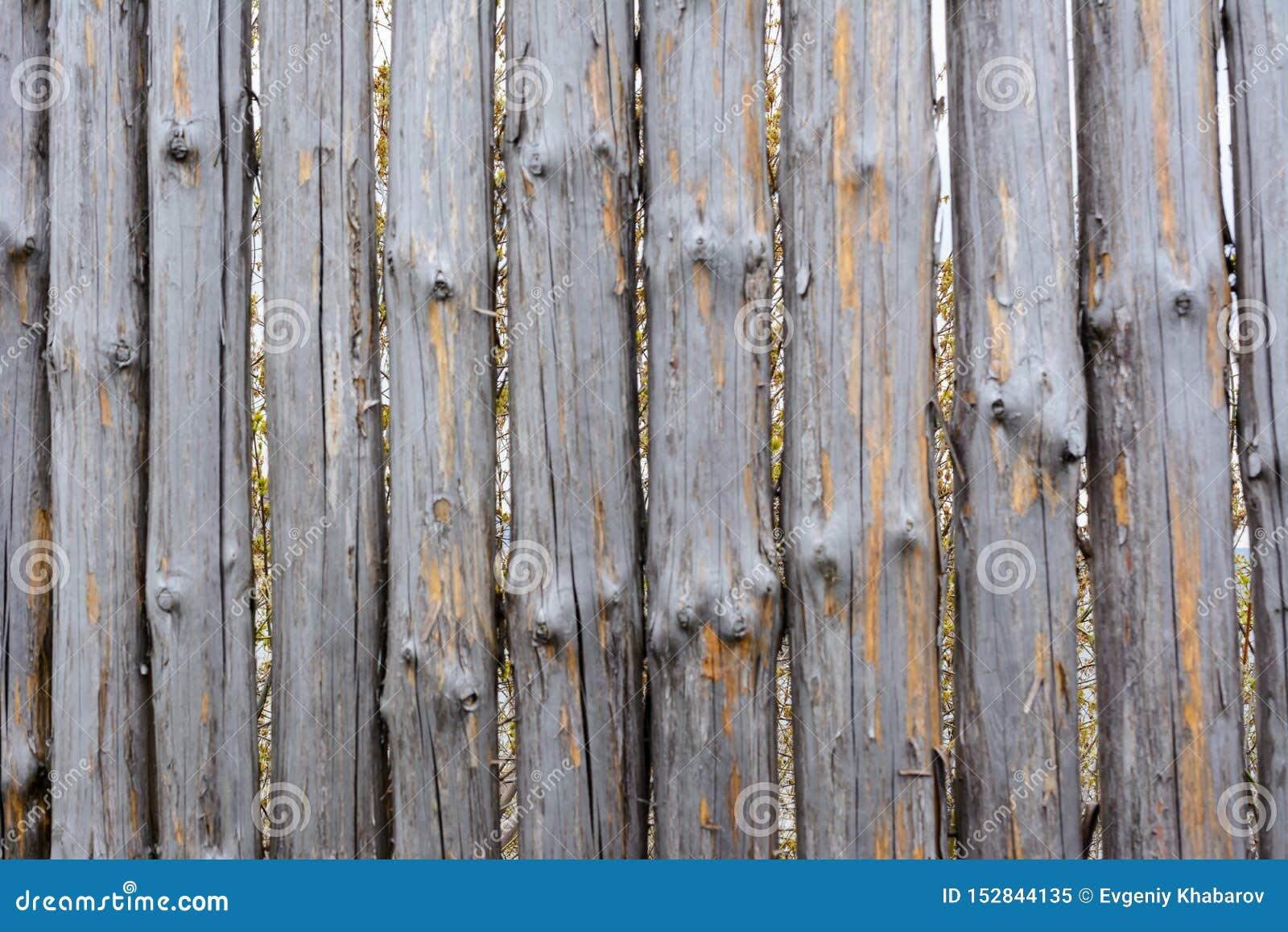 Текстура предпосылки старой серой деревянной загородки от всех журналов с узлами Затрапезная загородка